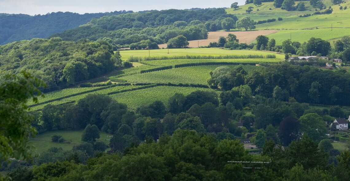 Woodchester Valley Vineyard
