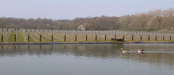 Danbury Ridge Wine Estate English Vineyard lake